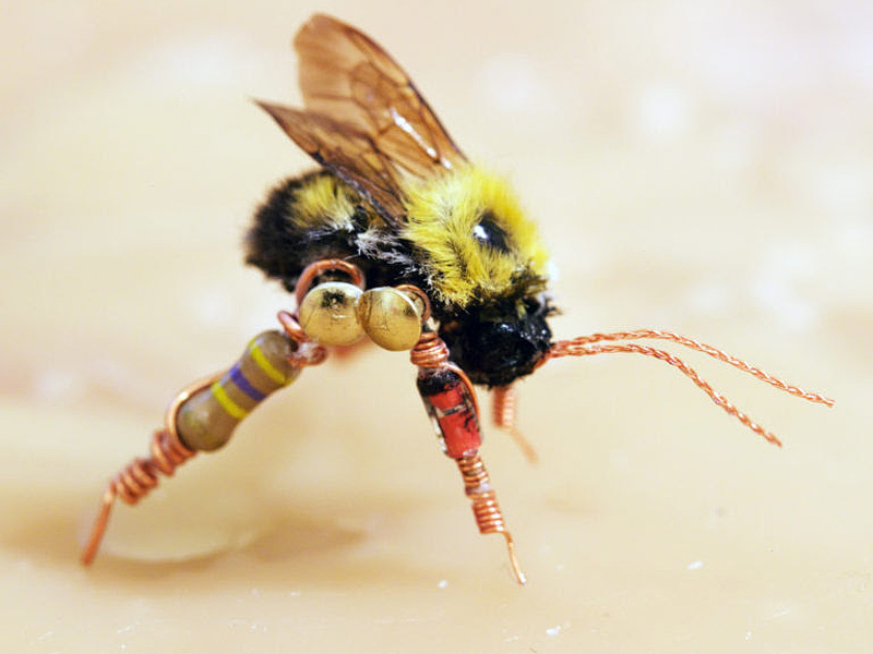 A preserved, bionic bee