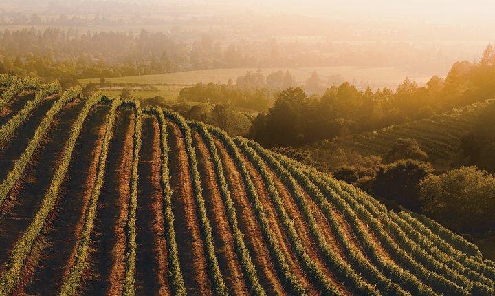Image - Wine Fair promo
