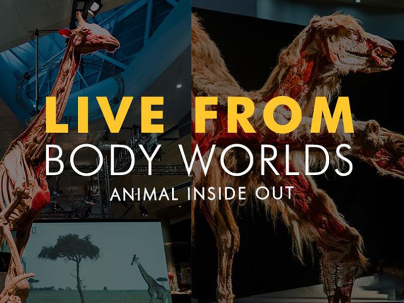 A graphic for Live from Spark in Body Worlds: Animal Inside Out