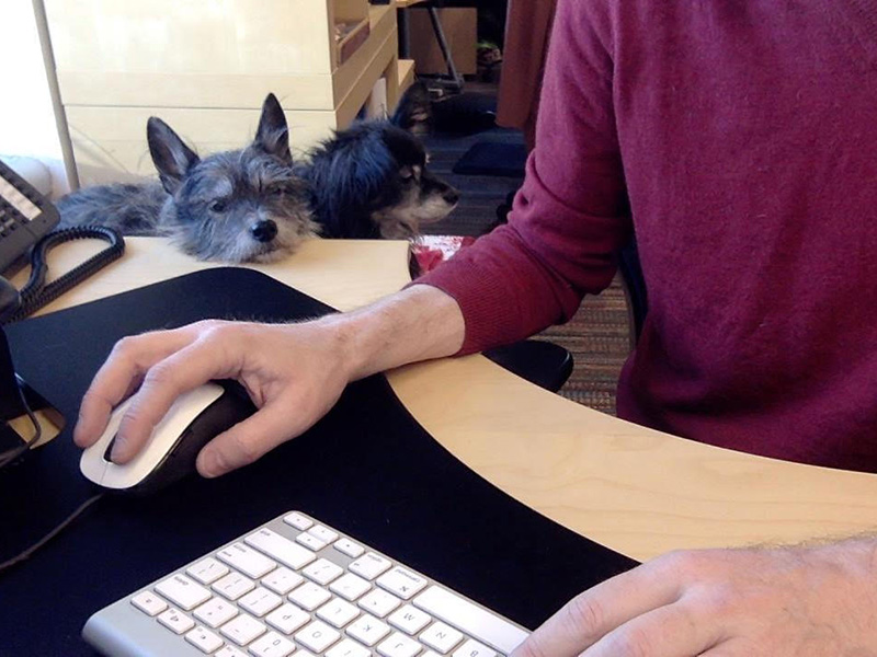 Greg Burbidge working at his desk with his dogs Scout and Zadie