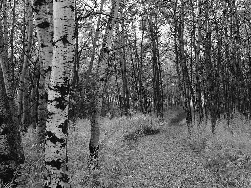 A black and white photo of a trail at the Leighton Art Centre